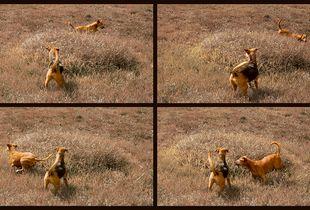 Hunting Round and Round