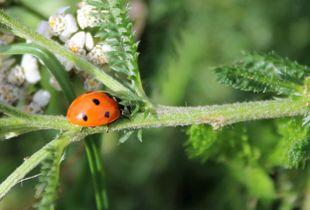 Ladybird Adventures