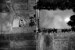 Rice plants Preparation for plantings (Aerial Picture)