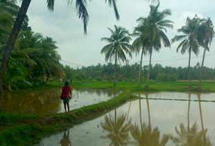 Rice Walla