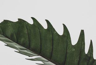 leaf to left
