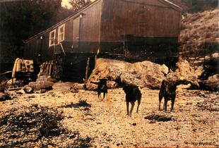 The First Album - Farm dogs