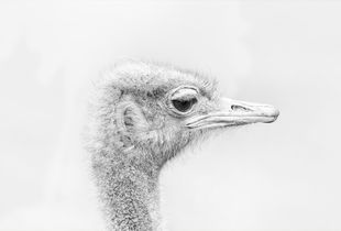 """Lady """"Ostrich"""" in white"""