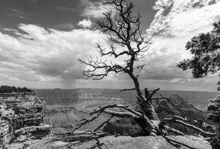Canyon Sentinel
