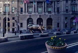 Charging Bull in Tranquility