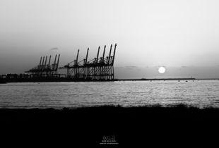 Chevaux du Port