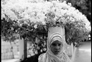 Aliya Maxamed Ibrahim