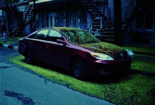Spring fell on his car