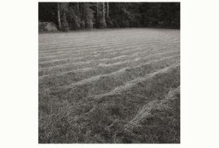Grassland I