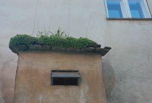1 - living roof