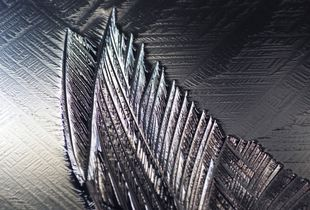 Ice Wings