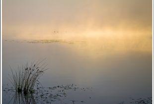Magic Mist