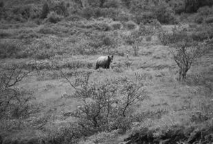 The Other Day I Saw a Bear