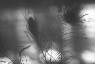 Shadow & light _1