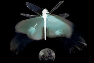 Dragonfly, from series 'Fluid Borders'