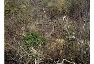 Totley Brook #1, 2010