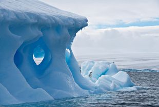Lone Penguin - © Adel Korkor