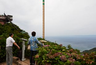 'Reclaimed by Nature or Man' ,The lookout point emerged in hydrangea shrubs of pinks and blue