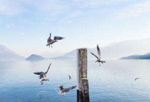 Quadrilateral of seagulls