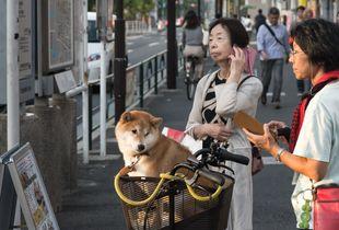 Phone and dog Tokyo