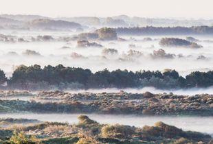 Mist in the dunes