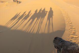 Early Morning in Sahara Desert
