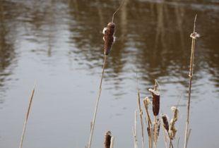 Stalks alongside water.