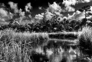 Barnett Creek