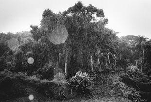 Landscape under the rain.