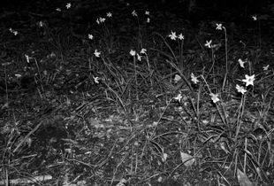Inner Forest VI