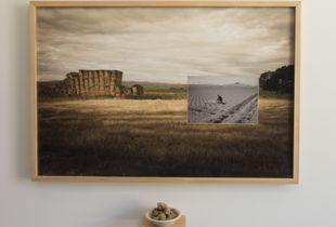 24 x 36  Digital print of Heart Mountain, Wyoming by Renee Billingslea ( 2019)  with inserted  photograph of War Relocation  propaganda photograph of incarcerated Japanese- American man examining harvest soil ( circa 1942)