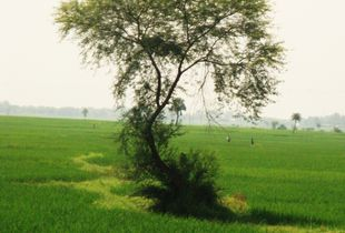 A Mystical Tree