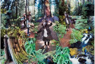 Dance of the Forest Dwellers
