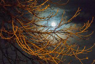 air03 - Winter Moon