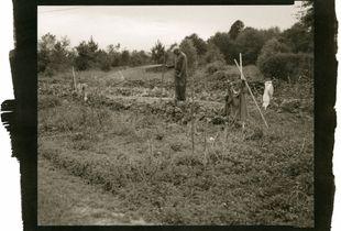 Inheritance: Myer's Garden