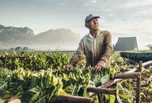 Farmers of Viñales - 1
