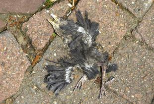 """""""I saw a dead bird flying through a broken sky…"""""""
