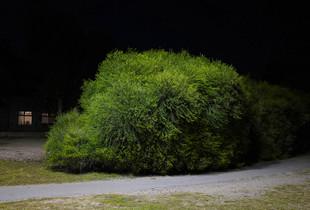 The advancing bush
