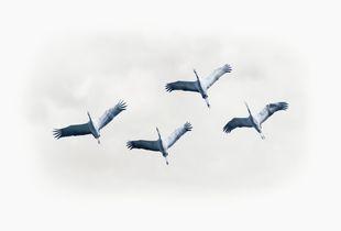 cranes with clauds
