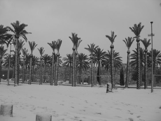 snowy palms
