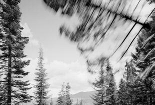Falling Tree # 2  © David Paul Bayles