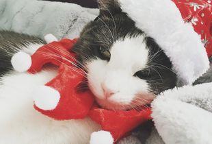 Leia Kittenwalker A Christmas Girl