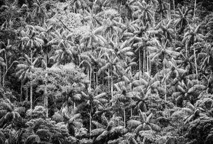 Terra das palmeiras