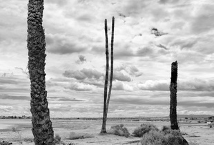 Totem Poles Of  A Spiritually Extinct Civilization
