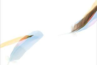 Wild Parrot Vall IV