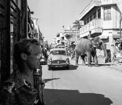 Elephant in the Street in Madras and Gary