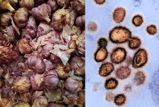 Cebollas y covid / Onions and covid