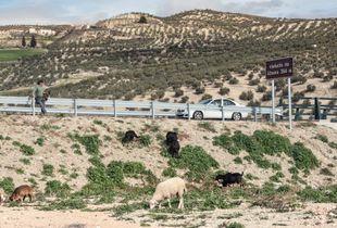 Shepherd and car