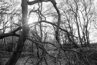 Hyons Wood, February 2020
