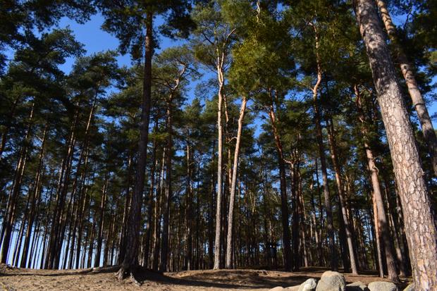 Natura Poland 2020-2021 Romantic landscapes